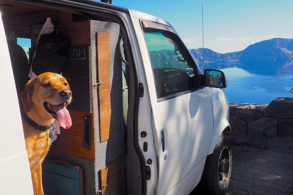 A happy yellow lab peeking his head out the door of a camper van in front of Crater Lake, Oregon