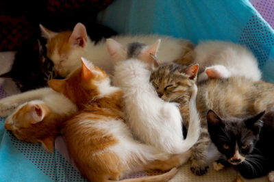 Seven foster kittens sleeping in a pile
