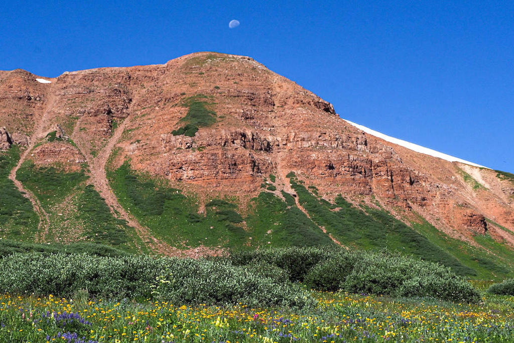A moon hanging in the blue sky above a mountain and a field of wildflowers